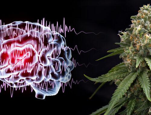 Le CBD pour calmer les crises d'épilepsie